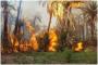 تبسة: حريق يلتهم هكتارين من غابة نخيل ببلدية فركان